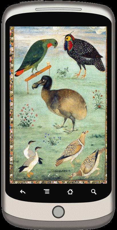 dodo-slate